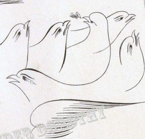 oiseaux calligraphie birds flourished à la plume à dessin et encre de chine
